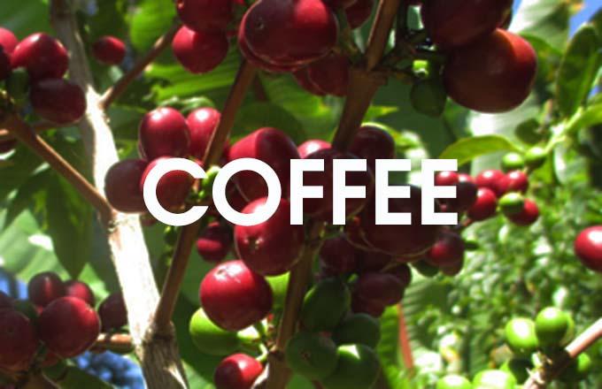 B coffee 680 f24